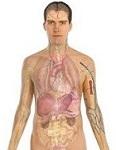 Whole body detoxification